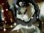 PandaLovesShadow's avatar