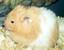 LionaSkycat's avatar