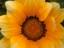 storm_pegasus's avatar