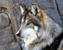 SonoftheAbyss's avatar