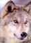 Morpher's avatar