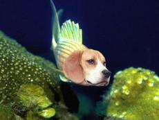 SquishiFish's picture