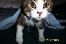 tonycat's picture