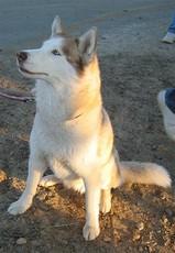Sukooru's picture