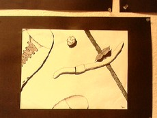 Doomboo's picture